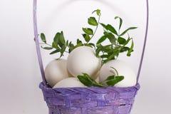 Biali jajka z zielenią rozgałęziają się w fiołkowym łozinowym bascet na białym tle obrazy royalty free
