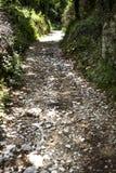 Biali kamienie kłaść puszek na małej ścieżce prowadzi przez krzaków z ciemniutkimi drzewami Kamienie zrównują mieć s stosunkowo obraz stock