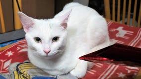 Biali kota koloru żółtego oczy Obraz Royalty Free
