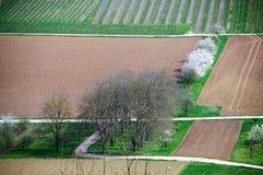 Biali kwiatonośni krzaki między polami i łąkami Obraz Royalty Free
