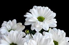 Biali kwiaty Fotografia Royalty Free