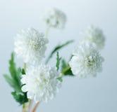 Biali kwiaty Obraz Royalty Free