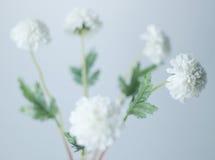 Biali kwiaty Zdjęcia Royalty Free