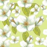 Biali kwiaty Fotografia Stock