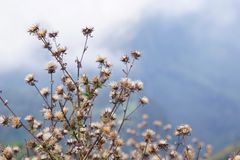Biali kwiaty i niebo Zdjęcia Royalty Free