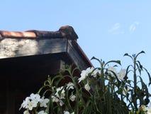 Biali kwiaty i zielone rośliny obok struktury zdjęcie stock