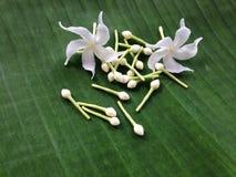 Biali kwiaty i zielony tło Obrazy Royalty Free