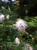 Biali kwiaty które spadają zdjęcia stock