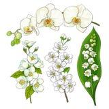 Biali kwiaty - leluja dolina, orchidea, jabłko, czereśniowy okwitnięcie ilustracja wektor
