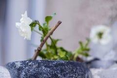 Biali kwiaty na balkonie 1 Zdjęcie Royalty Free