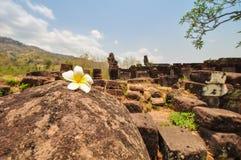 Biali kwiaty na ruinach, Loas Zdjęcie Royalty Free