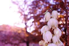 Biali kwiaty przy ranku czasem Obrazy Stock