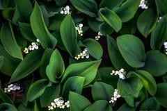 Biali kwiaty retro Obraz Royalty Free
