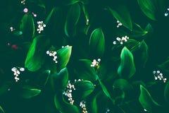 Biali kwiaty retro Obrazy Stock
