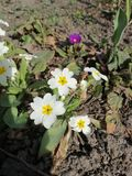 biali kwiaty w jardzie obraz stock