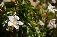 Biali kwiaty w miastowym parku Obrazy Royalty Free