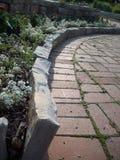 Biali kwiaty w ogródzie Zdjęcia Royalty Free