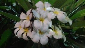 Biali kwiaty w ogródzie Zdjęcia Stock