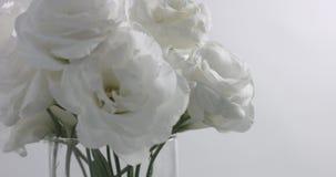 Biali kwiaty w pracownianym wideo krótkopędzie zdjęcie wideo