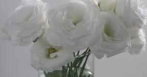 Biali kwiaty w pracownianym wideo krótkopędzie zbiory wideo