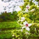 Biali kwiaty w zielonym tle fotografia stock