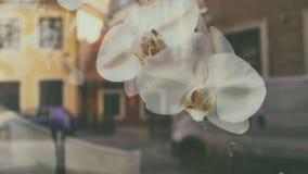 Biali kwiaty z odbiciem w szkle obrazy stock