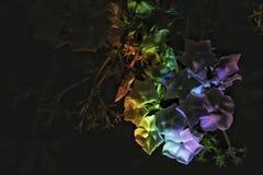 Biali kwiaty z tęcza skutkami fotografia stock