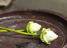 Biali lotosowi kwiaty Zdjęcie Stock