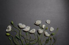 Biali maczki na szarym tle Fotografia Stock