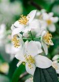 Biali mali kwiaty Fotografia Stock