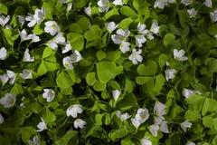 Biali mali kwiaty w lesie obraz royalty free