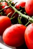 biali misek wiśnie pomidorów Obraz Royalty Free
