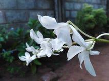 Biali okwitnięcie kwiaty zdjęcia stock