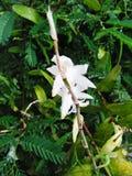 Biali orchidea kwiaty obrazy stock