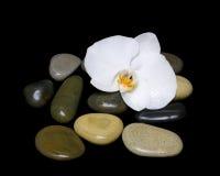 Biali orchidei i morza kamienie na czarnym tle Zdjęcie Stock