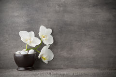 Biali orchidei i zdroju kamienie na popielatym tle Fotografia Royalty Free