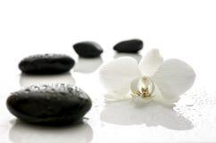Biali orchidei i zdroju kamienie z wodnymi kroplami Obrazy Stock