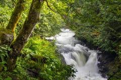 Biali Łososiowi rzeka spadki Fotografia Royalty Free