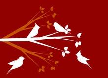 Biali ptaki Obraz Stock