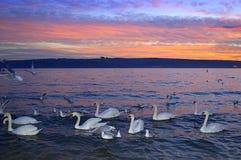 Biali ptaki wzdłuż evenig seashore Zdjęcia Stock
