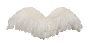 Biali ptaków skrzydła Zdjęcia Stock