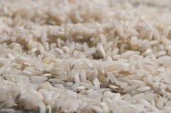 Biali ryż rozpraszali na odosobnionym czarnym tle zdjęcie stock
