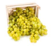 Biali stołowi winogrona w drewnianej skrzynce (Vitis) Obraz Royalty Free
