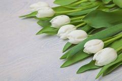 Biali tulipany na białym drewnianym tle Obrazy Royalty Free