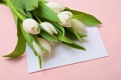 Biali tulipany na różowym tle Obraz Royalty Free