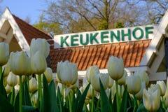 Biali tulipany przed Keukenhof podpisują przy Keukenhof ogródami, Lisse, Południowy Holandia zdjęcia royalty free