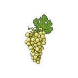 Biali winogrona na tle Zdjęcie Royalty Free