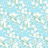 Biali wiosny drzewa kwiaty Zdjęcie Royalty Free