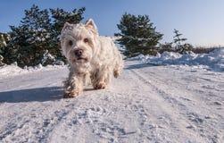 Biali zima ślada Fotografia Stock