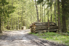 Bialowieza森林  库存照片